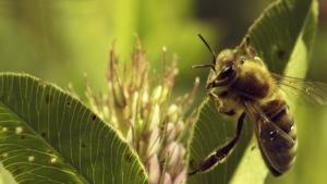 honey programme